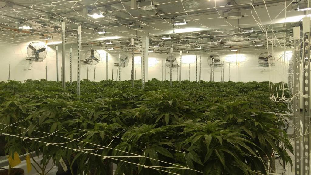THC-The-Hardy-Consultants-Washington-Trip-2017-big-garden-2