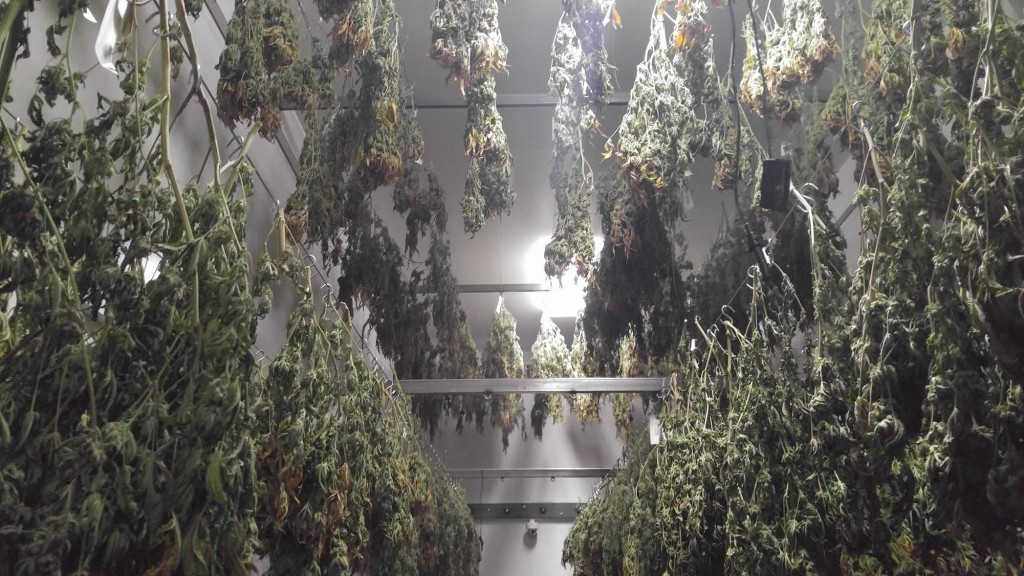 THC-The-Hardy-Consultants-Washington-Trip-2017-drying-2